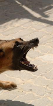 chien-aboyer-voisin