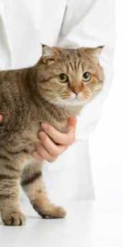 Tarifs prix assurance mutuelle chat