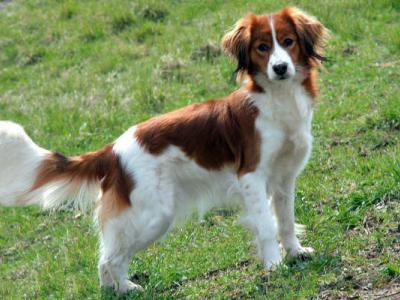Top Fiches Animaux, Chien, page 32 | Mutuelle Animaux HO31