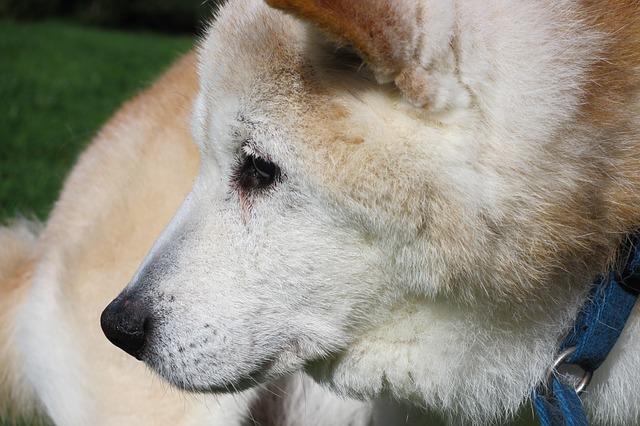 vieux-chien-soin